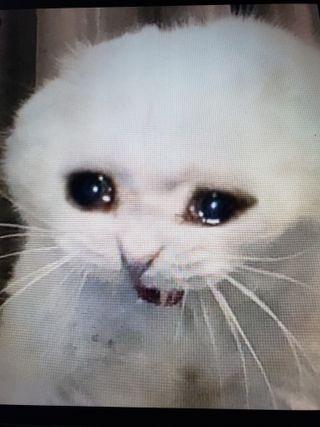Обои на телефон мем, лол, кошки, котята, коты, забавные, грустные, белые, sad cat, luagh, lol