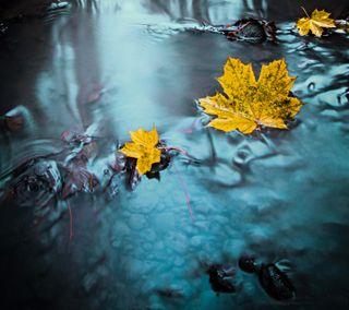 Обои на телефон синие, плавающий, осень, мокрые, листья, вода