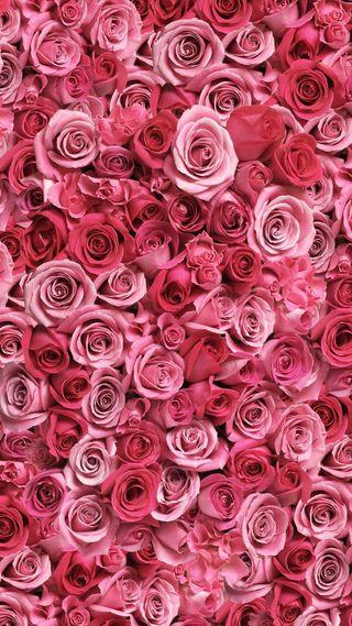 Обои на телефон цветы, романтика, розы, день, валентинка