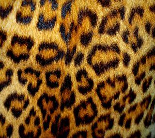 Обои на телефон мех, леопард, текстуры, кошки, spots