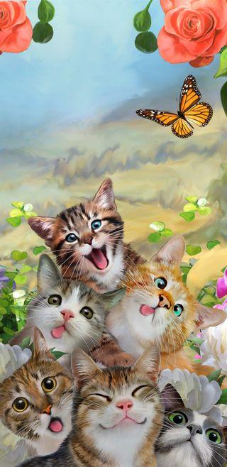 Обои на телефон селфи, бабочки, кошки, котята, забавные, животные, cat selfie