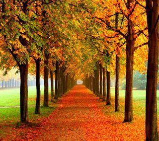 Обои на телефон путь, осень, взгляд, приятные, autumn path