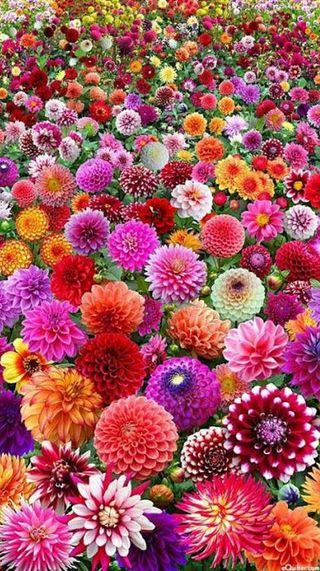 Обои на телефон сад, цветы, природа, красочные
