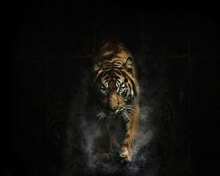 Обои на телефон дикие, тигр, животные, дым, дикий