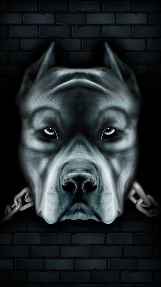 Обои на телефон цепь, собаки, черные, pitbul