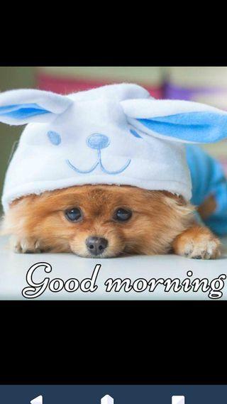 Обои на телефон щенки, утро, puppy morning, doggu