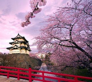 Обои на телефон вишня, пейзаж, дом, дерево, japanes, cherry tree