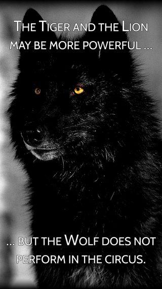 Обои на телефон будь, тигр, мощный, мотивация, мотивационные, лев, лайк, волк, circus, be like the wolf