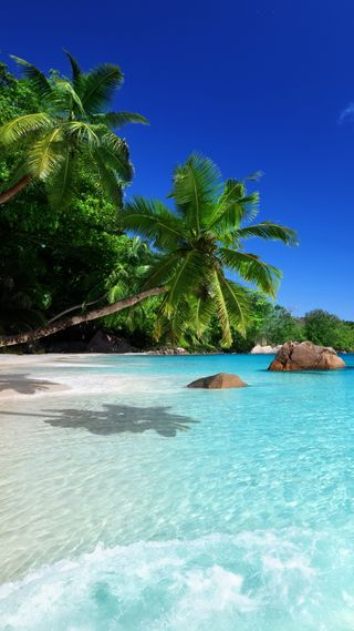 Обои на телефон тропические, рай, пляж, пальмы, море