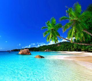 Обои на телефон тропические, взгляд, приятные, пляж