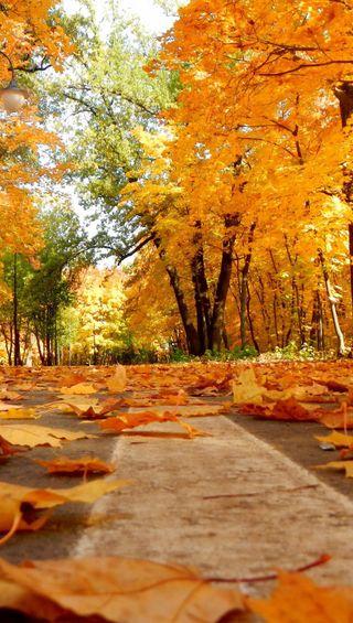 Обои на телефон падение, осень, листья, дорога