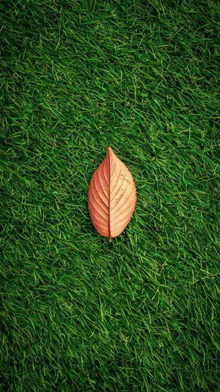 Обои на телефон трава, листья, зеленые, zedze wallpaper, green grass