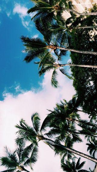 Обои на телефон природа, пальмы, good