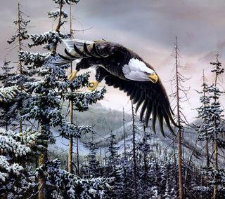 Обои на телефон джунгли, снег, птицы, орел, летать, лес, зима