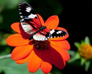 Обои на телефон сад, цветы, цветные, оранжевые, бабочки