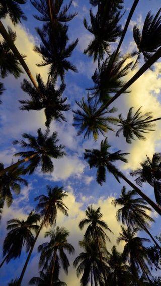 Обои на телефон эпл, природа, пальмы, лето, palmtree, palms 3, galaxys7, apple