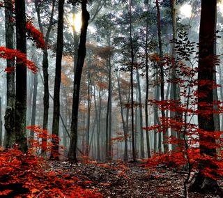 Обои на телефон лес, jm, dw
