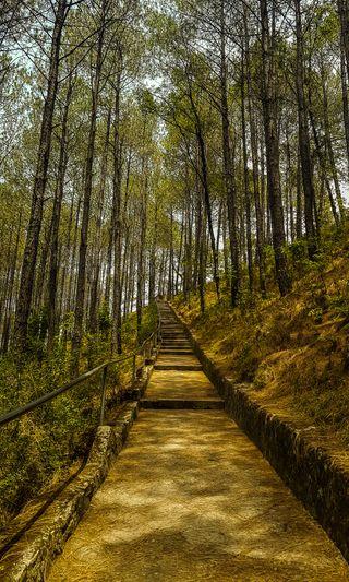 Обои на телефон фотография, путь, природа, небеса, дорога, дерево, way to heaven