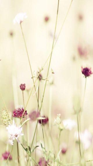 Обои на телефон дружба, цветы, фотография, природа, прекрасные, любовь, love