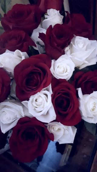 Обои на телефон цветы, розы, красые