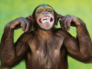 Обои на телефон обезьяны, sorry, mumbai masala