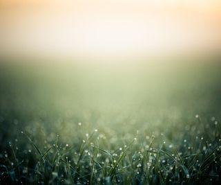Обои на телефон мокрые, утро, трава, роса, поле