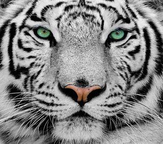 Обои на телефон тигр, машины, животные, белые
