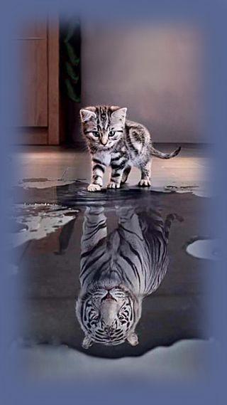 Обои на телефон тигр, кошки, cat 01