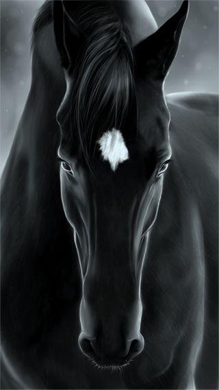 Обои на телефон лошадь, черные