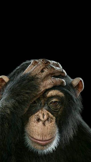 Обои на телефон сильный, обезьяны, растения, война, revolution