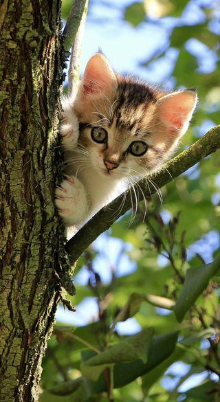 Обои на телефон маленький, кошки, котята, коты