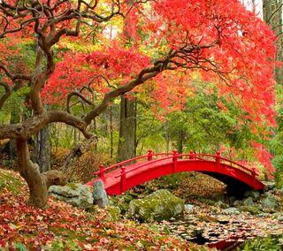 Обои на телефон парк, осень, мост, листья, лес