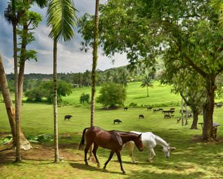Обои на телефон прогулка, природа, парк, лошадь, лошади, лес, животные, дерево
