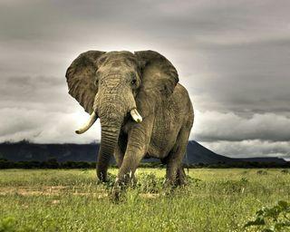 Обои на телефон слон, приятные, крутые, классные