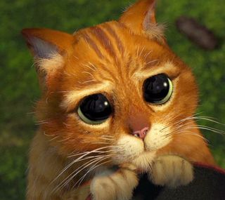 Обои на телефон мультфильмы, кошки, shrek, cat cartoon shrek, cat cartoon