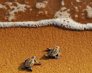 Обои на телефон черепаха, море, turtle and sea, by riyadhali66