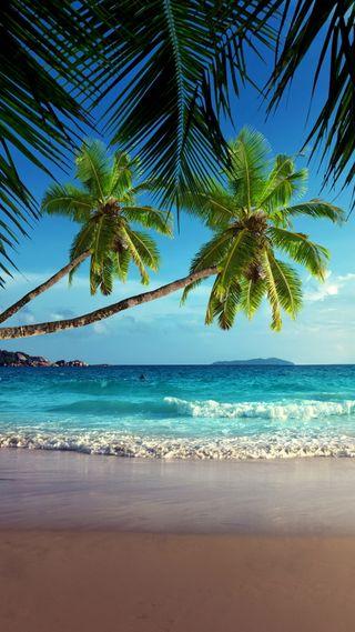Обои на телефон песок, тропические, пляж, пальмы, море