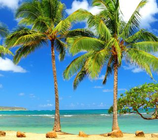 Обои на телефон тропики, природа, пляж, пейзаж, пальмы, океан, деревья, дерево