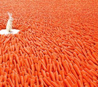 Обои на телефон кролики, rabbit and carrot, -------------