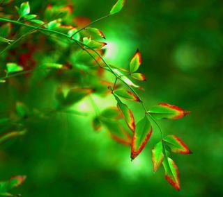 Обои на телефон макро, природа, листья, зеленые, ветка, боке