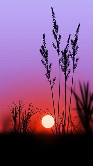 Обои на телефон растения, черные, фиолетовые, темные, солнце, силуэт, природа, пейзаж, ночь, закат, husks