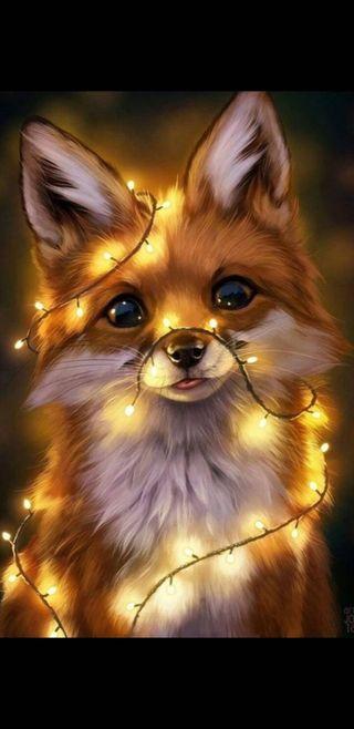 Обои на телефон милые, лиса, foxes