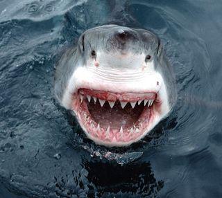 Обои на телефон акула, --------------
