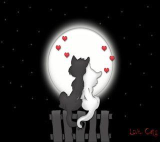 Обои на телефон вместе, ты, навсегда, милые, любовь, котята, коты, love cats, love