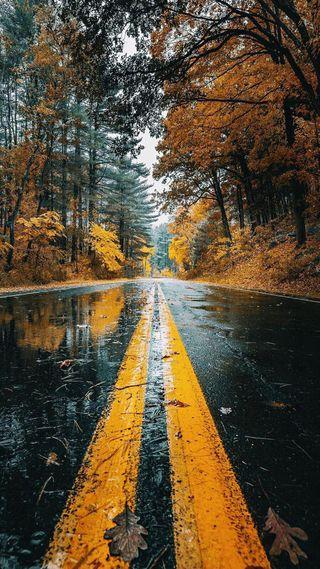 Обои на телефон wet road, природа, дерево, дорога, осень, листья, мокрые, дождь