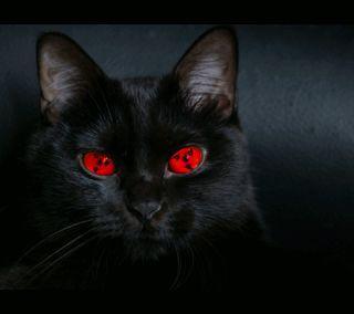 Обои на телефон шаринган, черные, приятные, кошки