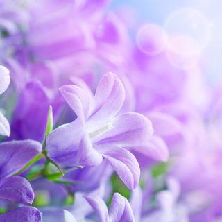 Обои на телефон естественные, цветы, фиолетовые, природа, прекрасные, крутые
