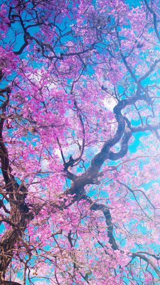 Обои на телефон небо, дерево, солнце, весна, сакура, вишня
