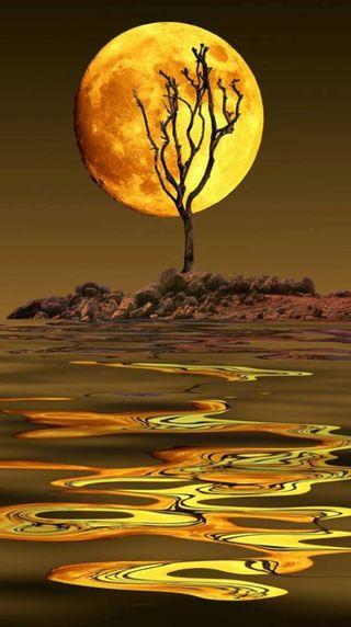Обои на телефон отражение, луна, золотые, дерево