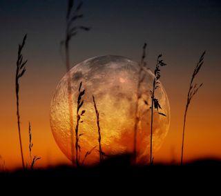 Обои на телефон трава, темные, ночь, луна, красые, закат, full moon and grass, full